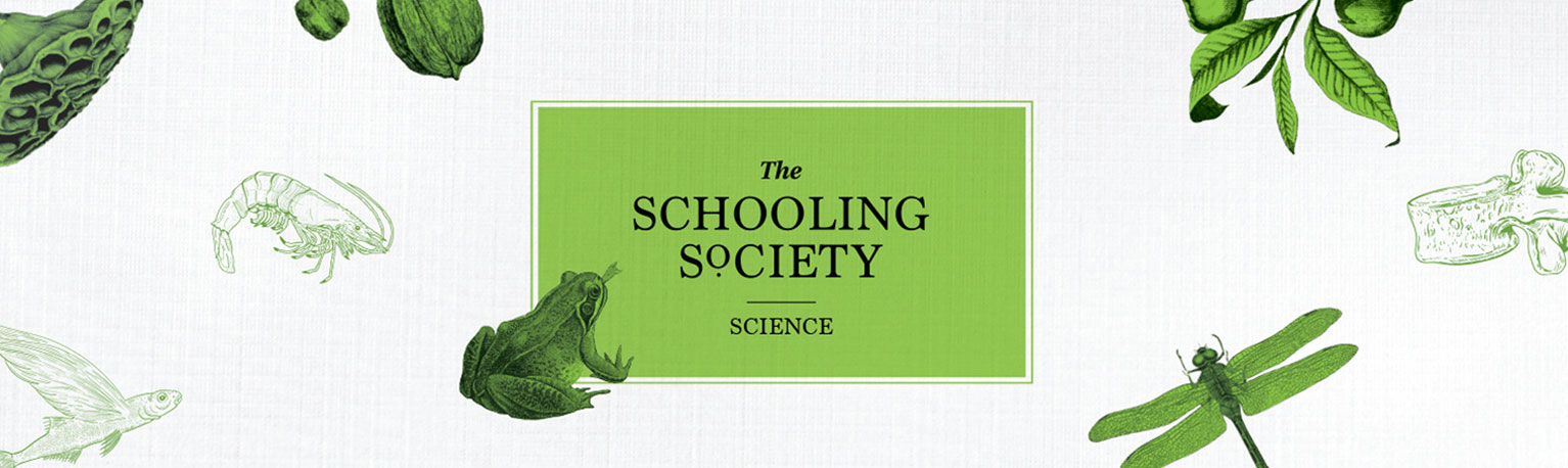 The Schooling Society Boutique Enrichment Centre Bukit Timah tuition classes primary science